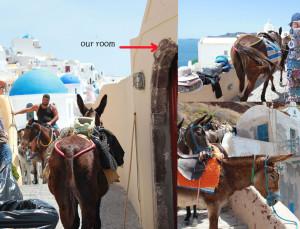 Donkeys-Oia